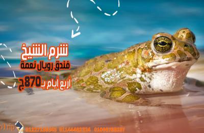 حجز-شرم-الشيخ-فندق-رويال-نعمة